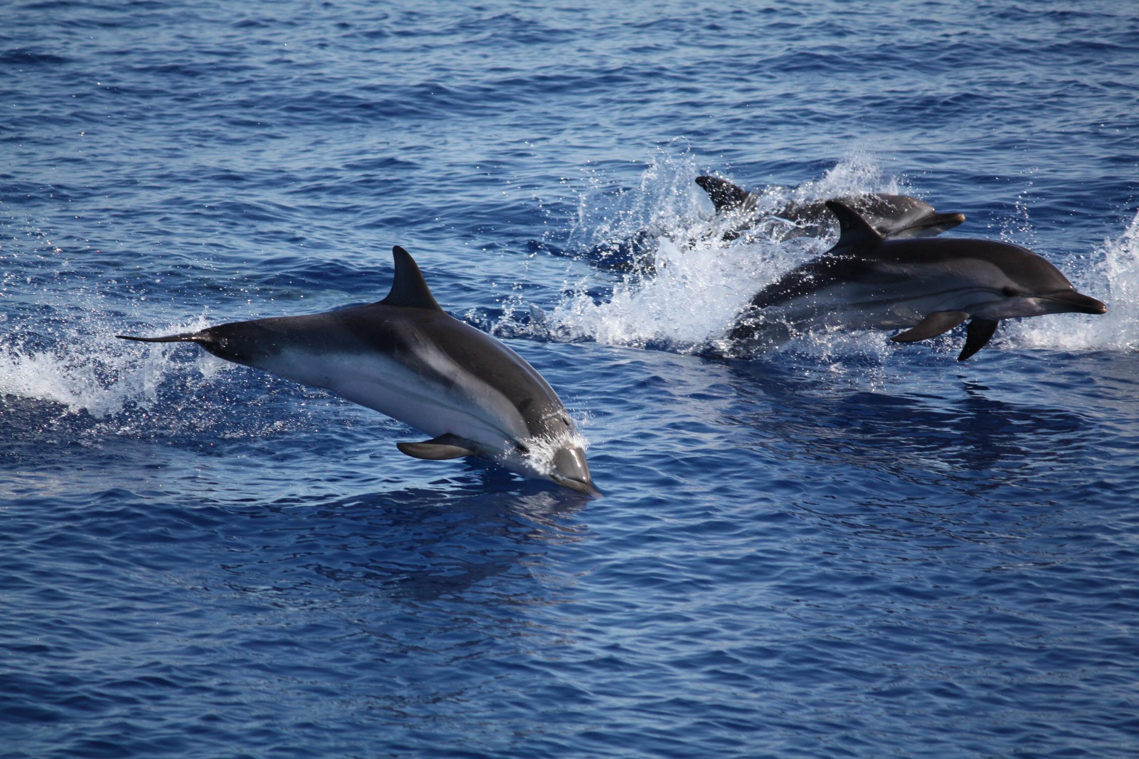 Centro Ricerca Delfini Lampedusa