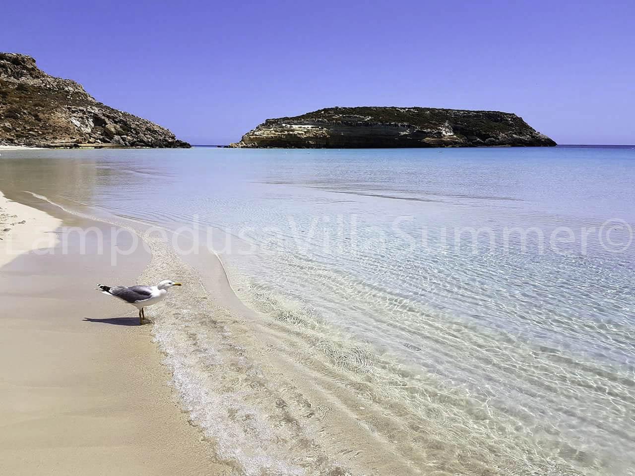 L Isola Dei Conigli La Spiaggia Piu Bella Del Mondo Lampedusa