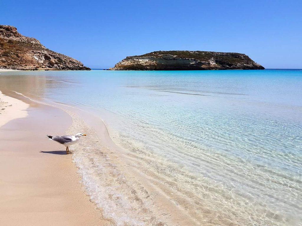 Spiaggia Lampedusa - Isola Dei Conigli